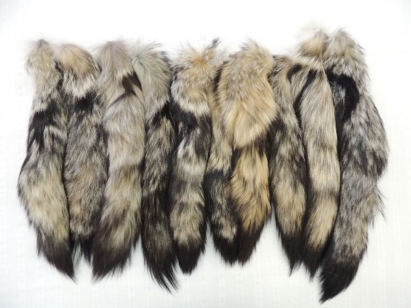 Grey Fox Tail